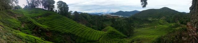 Panorama menuju ladang teh